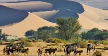 Bitcoin secondo la Banca della Namibia è illegale