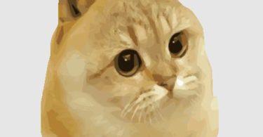 criptovaluta meme catge